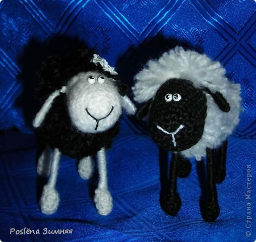 Пара овечек. фото 10