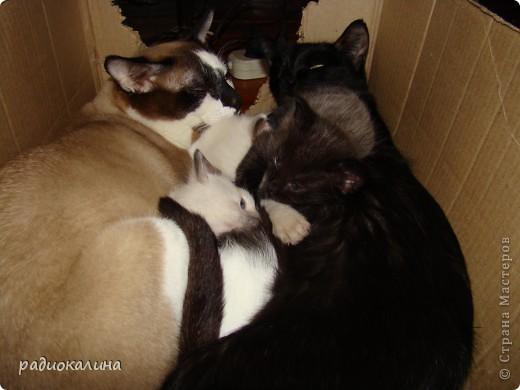 Это Настя и Персик, единственный котенок осавшийся у нас в семье и выросший у нас любимцем всей семьи. Его нам вернули за его разговорчивость. фото 10