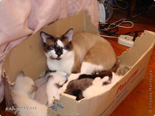 Это Настя и Персик, единственный котенок осавшийся у нас в семье и выросший у нас любимцем всей семьи. Его нам вернули за его разговорчивость. фото 11