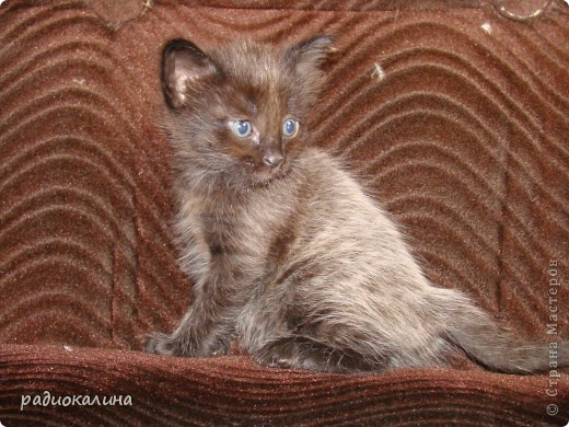 Это Настя и Персик, единственный котенок осавшийся у нас в семье и выросший у нас любимцем всей семьи. Его нам вернули за его разговорчивость. фото 12