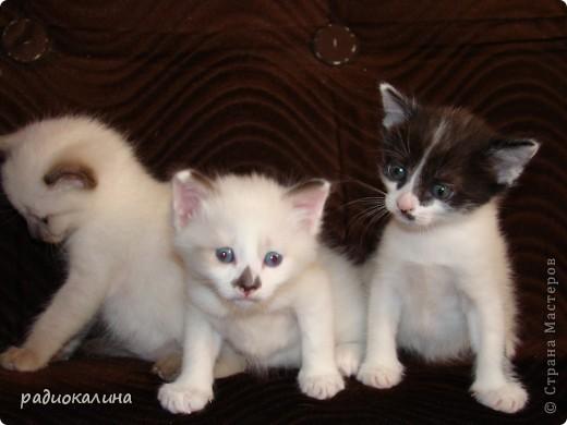Это Настя и Персик, единственный котенок осавшийся у нас в семье и выросший у нас любимцем всей семьи. Его нам вернули за его разговорчивость. фото 13