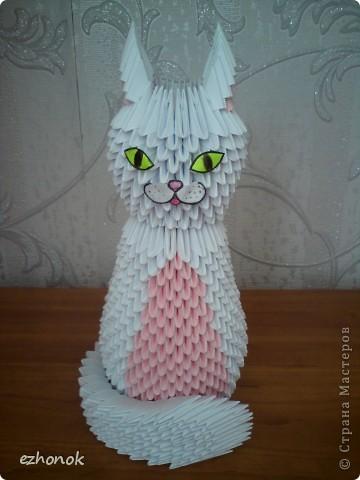 Кошка фото 3