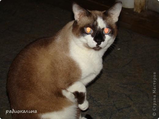 Это Настя и Персик, единственный котенок осавшийся у нас в семье и выросший у нас любимцем всей семьи. Его нам вернули за его разговорчивость. фото 2