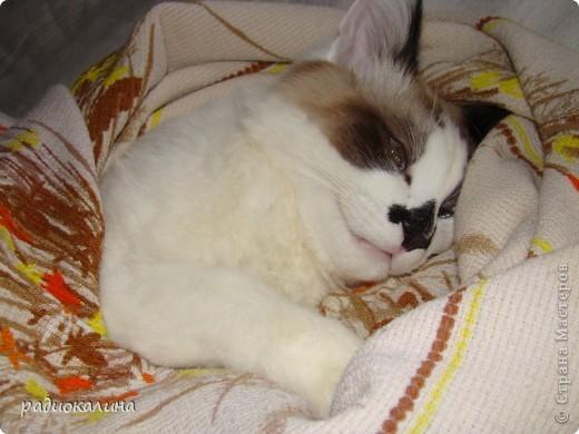 Это Настя и Персик, единственный котенок осавшийся у нас в семье и выросший у нас любимцем всей семьи. Его нам вернули за его разговорчивость. фото 3