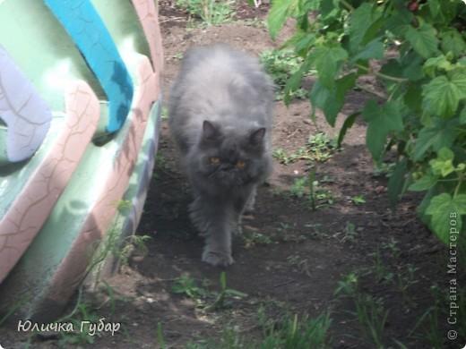 Люся на дачу, кушает травку) фото 11