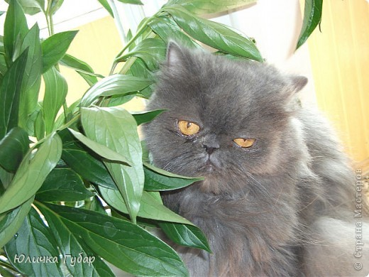 Люся на дачу, кушает травку) фото 2