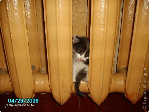 Это Настя и Персик, единственный котенок осавшийся у нас в семье и выросший у нас любимцем всей семьи. Его нам вернули за его разговорчивость. фото 6