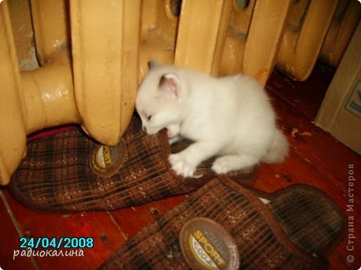 Это Настя и Персик, единственный котенок осавшийся у нас в семье и выросший у нас любимцем всей семьи. Его нам вернули за его разговорчивость. фото 7