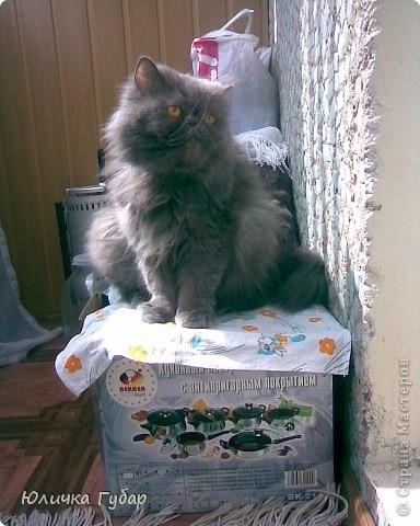 Люся на дачу, кушает травку) фото 3