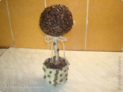 Насмотрелась  я на кофейные деревья и решила, что мне тоже надо!!! фото 2