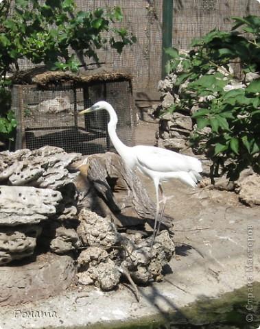 """Всем привет! После поездки в дельфинарий в июне (http://stranamasterov.ru/node/207600) решили, что поедем еще в зоопарк и """"Джунгли-парк"""". И только в этот вторник мы (я и старший сын) наконец-то осуществили наши планы. Решили и вам показать, что интересного мы видели:) Перед Одесским зоопарком есть аквариум-террариум. С него мы и начали.  Морской еж. Очень необычный глаз у него - постоянно прятался внутрь и появлялся снова. фото 13"""