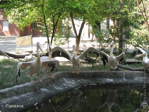 """Всем привет! После поездки в дельфинарий в июне (http://stranamasterov.ru/node/207600) решили, что поедем еще в зоопарк и """"Джунгли-парк"""". И только в этот вторник мы (я и старший сын) наконец-то осуществили наши планы. Решили и вам показать, что интересного мы видели:) Перед Одесским зоопарком есть аквариум-террариум. С него мы и начали.  Морской еж. Очень необычный глаз у него - постоянно прятался внутрь и появлялся снова. фото 18"""