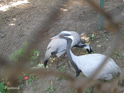 """Всем привет! После поездки в дельфинарий в июне (http://stranamasterov.ru/node/207600) решили, что поедем еще в зоопарк и """"Джунгли-парк"""". И только в этот вторник мы (я и старший сын) наконец-то осуществили наши планы. Решили и вам показать, что интересного мы видели:) Перед Одесским зоопарком есть аквариум-террариум. С него мы и начали.  Морской еж. Очень необычный глаз у него - постоянно прятался внутрь и появлялся снова. фото 45"""