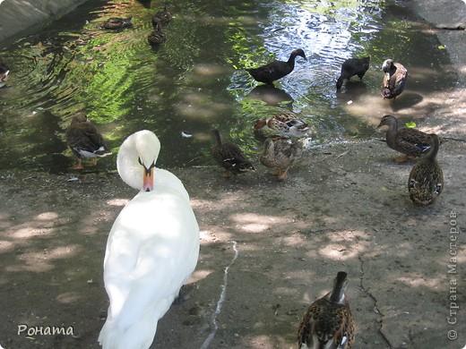 """Всем привет! После поездки в дельфинарий в июне (http://stranamasterov.ru/node/207600) решили, что поедем еще в зоопарк и """"Джунгли-парк"""". И только в этот вторник мы (я и старший сын) наконец-то осуществили наши планы. Решили и вам показать, что интересного мы видели:) Перед Одесским зоопарком есть аквариум-террариум. С него мы и начали.  Морской еж. Очень необычный глаз у него - постоянно прятался внутрь и появлялся снова. фото 46"""