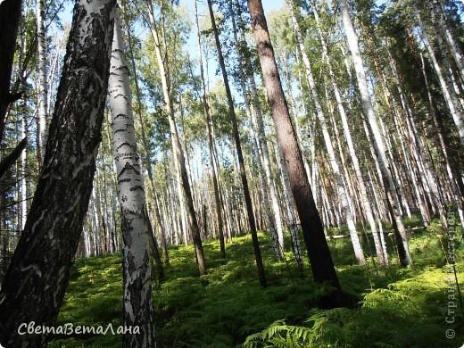 ........приглашаю вас прогуляться по лесу..........кругом тишина.........птички поют.........деревья перешептываются......... фото 1