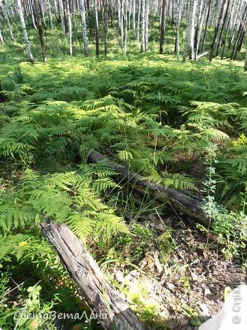........приглашаю вас прогуляться по лесу..........кругом тишина.........птички поют.........деревья перешептываются......... фото 15
