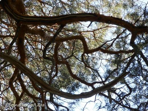 ........приглашаю вас прогуляться по лесу..........кругом тишина.........птички поют.........деревья перешептываются......... фото 18