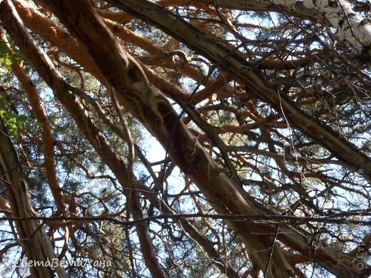 ........приглашаю вас прогуляться по лесу..........кругом тишина.........птички поют.........деревья перешептываются......... фото 19
