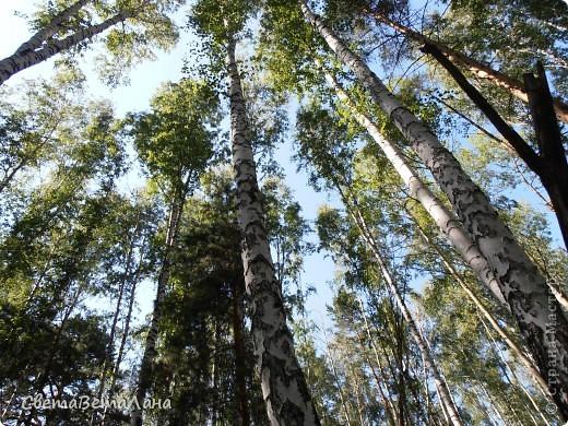 ........приглашаю вас прогуляться по лесу..........кругом тишина.........птички поют.........деревья перешептываются......... фото 2