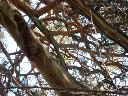 ........приглашаю вас прогуляться по лесу..........кругом тишина.........птички поют.........деревья перешептываются......... фото 20