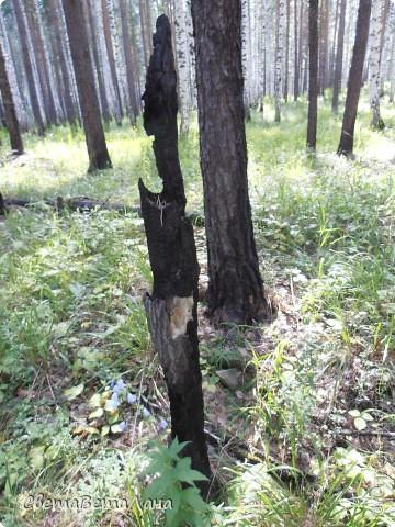........приглашаю вас прогуляться по лесу..........кругом тишина.........птички поют.........деревья перешептываются......... фото 3