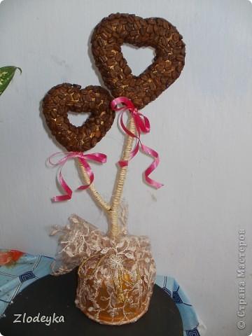 Моё первое кофейное деревце для подруги надеюсь что понравится. фото 1
