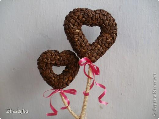 Моё первое кофейное деревце для подруги надеюсь что понравится. фото 3