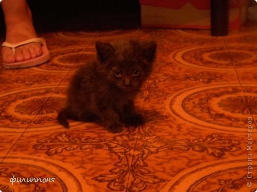 С дочкой подобрали котёнка. Он был такой маленький, голодный, грязный,слабенький. И мы решили его выходить. фото 1
