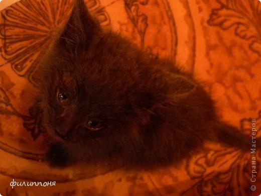 С дочкой подобрали котёнка. Он был такой маленький, голодный, грязный,слабенький. И мы решили его выходить. фото 2