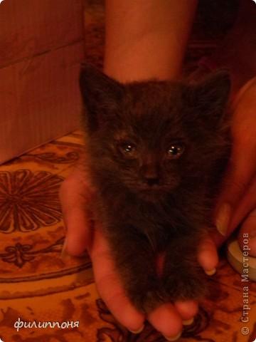 С дочкой подобрали котёнка. Он был такой маленький, голодный, грязный,слабенький. И мы решили его выходить. фото 3