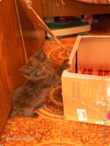 С дочкой подобрали котёнка. Он был такой маленький, голодный, грязный,слабенький. И мы решили его выходить. фото 4