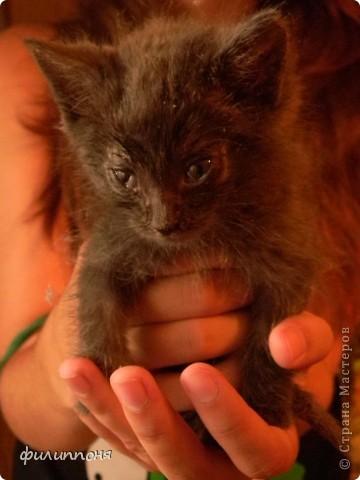 С дочкой подобрали котёнка. Он был такой маленький, голодный, грязный,слабенький. И мы решили его выходить. фото 5