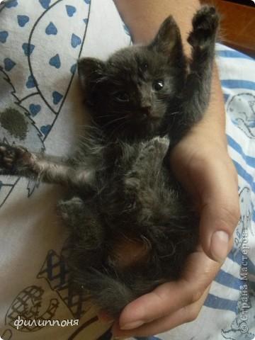 С дочкой подобрали котёнка. Он был такой маленький, голодный, грязный,слабенький. И мы решили его выходить. фото 8
