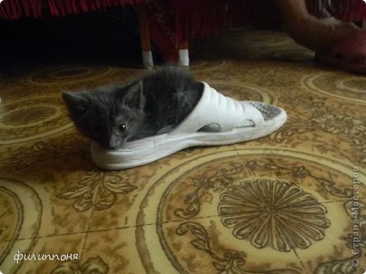 С дочкой подобрали котёнка. Он был такой маленький, голодный, грязный,слабенький. И мы решили его выходить. фото 9