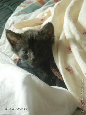 С дочкой подобрали котёнка. Он был такой маленький, голодный, грязный,слабенький. И мы решили его выходить. фото 10