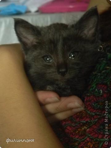 С дочкой подобрали котёнка. Он был такой маленький, голодный, грязный,слабенький. И мы решили его выходить. фото 11