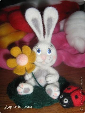 Мой второй зайчик!  фото 7