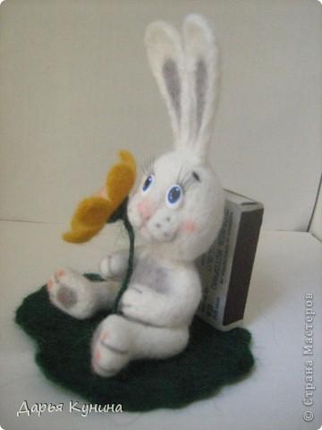Мой второй зайчик!  фото 4