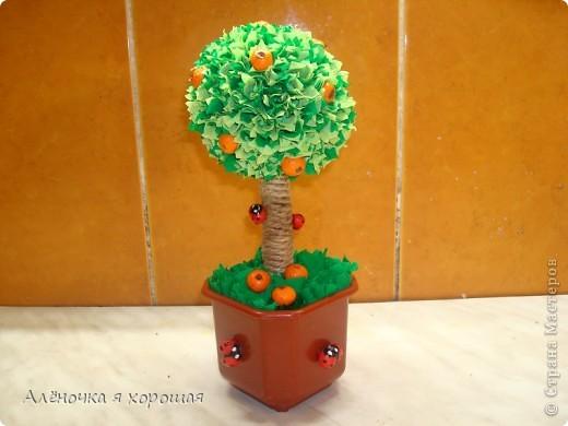 Вот и моё дерево!!! Принимайте в сад!!! фото 1