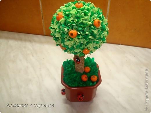 Вот и моё дерево!!! Принимайте в сад!!! фото 4