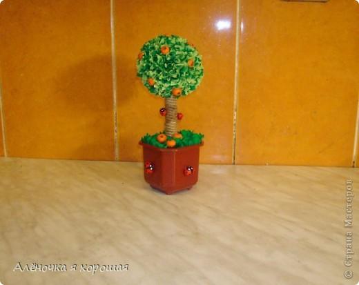 Вот и моё дерево!!! Принимайте в сад!!! фото 5
