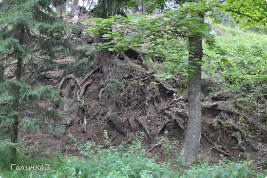 Сегодня предлагаю вашему вниманию просто фото с Валаама. Они сделаны в разных местах и в разное время, но не сфотографировать такую красоту было просто выше моих сил. Вот так на Валааме растут деревья. фото 10