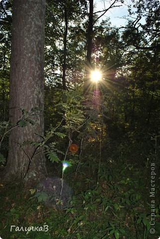 Сегодня предлагаю вашему вниманию просто фото с Валаама. Они сделаны в разных местах и в разное время, но не сфотографировать такую красоту было просто выше моих сил. Вот так на Валааме растут деревья. фото 33