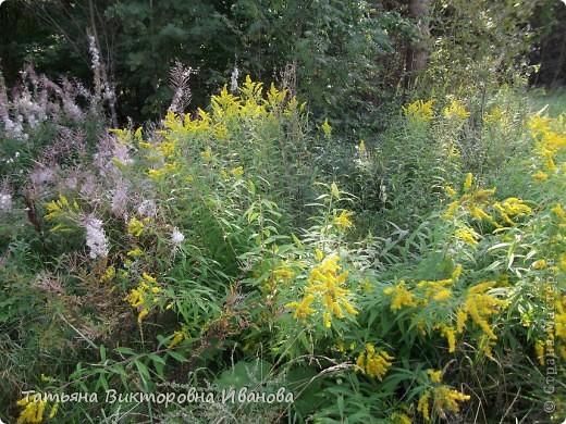 Экология души или прогулка в лес фото 2