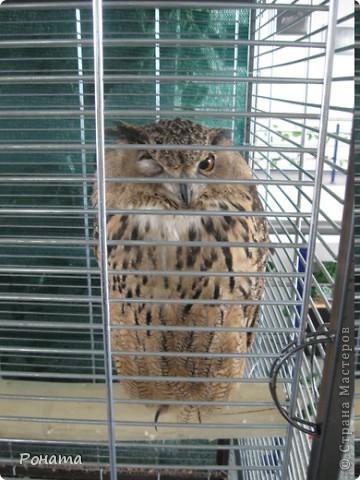 """Всем привет! Начало экскурсии по зоопаркам здесь - http://stranamasterov.ru/node/231393. А теперь мы отправимся на морской вокзал в галерею, где расположилась выставка экзотических животных """"Джунгли-парк"""".  фото 15"""