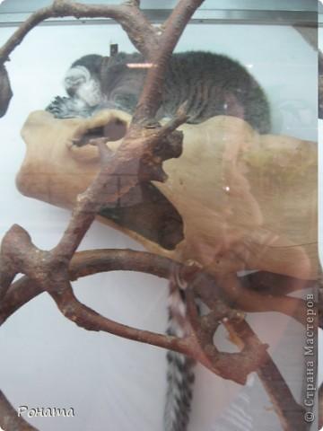 """Всем привет! Начало экскурсии по зоопаркам здесь - http://stranamasterov.ru/node/231393. А теперь мы отправимся на морской вокзал в галерею, где расположилась выставка экзотических животных """"Джунгли-парк"""".  фото 17"""