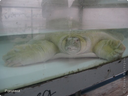 """Всем привет! Начало экскурсии по зоопаркам здесь - http://stranamasterov.ru/node/231393. А теперь мы отправимся на морской вокзал в галерею, где расположилась выставка экзотических животных """"Джунгли-парк"""".  фото 28"""