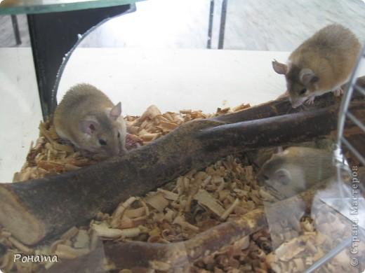 """Всем привет! Начало экскурсии по зоопаркам здесь - http://stranamasterov.ru/node/231393. А теперь мы отправимся на морской вокзал в галерею, где расположилась выставка экзотических животных """"Джунгли-парк"""".  фото 19"""