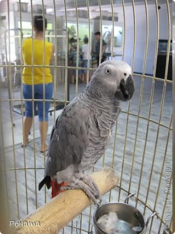 """Всем привет! Начало экскурсии по зоопаркам здесь - http://stranamasterov.ru/node/231393. А теперь мы отправимся на морской вокзал в галерею, где расположилась выставка экзотических животных """"Джунгли-парк"""".  фото 13"""