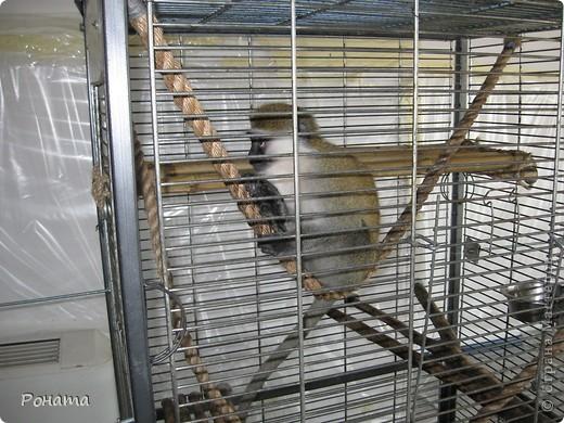 """Всем привет! Начало экскурсии по зоопаркам здесь - http://stranamasterov.ru/node/231393. А теперь мы отправимся на морской вокзал в галерею, где расположилась выставка экзотических животных """"Джунгли-парк"""".  фото 21"""